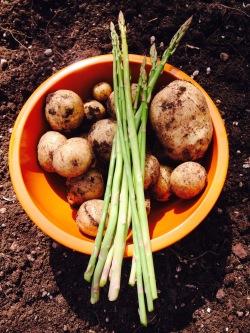 Yukon Gold Potatoes and asparagus.