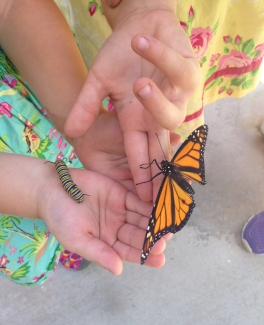 Maya and Aliya holding a newly hatched Monarch, and a nice plump caterpillar